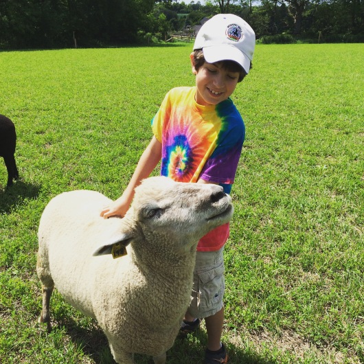 Noah and rescued sheep at sanctuary by Miriam Porter copy